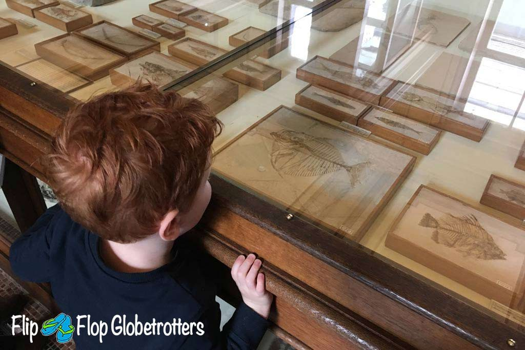 FlipFlopGlobetrotters.com - Blog: Teylers Museum Haarlem - checking out the fossils