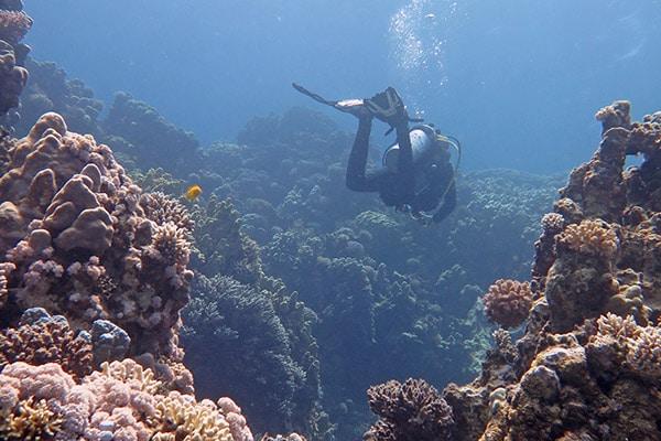 FlipFlopGlobetrotters.com - Top 5 dive sites Dahab - Islands