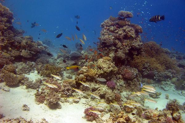 FlipFlopGlobetrotters.com - Top 5 dive sites Dahab - Underwater aquarium