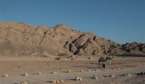 FlipFlopGlobetrotters.com - desert safari Dahab Egypt