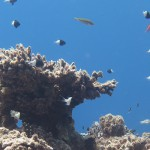 Our favorite dive sites in Dahab