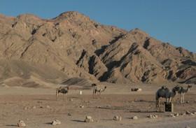 Dahab: camping in the Sinai desert