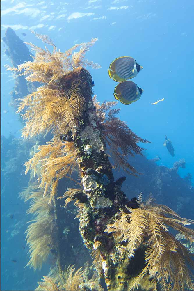 The USAT Liberty at Tulamben is a fantastic dive site