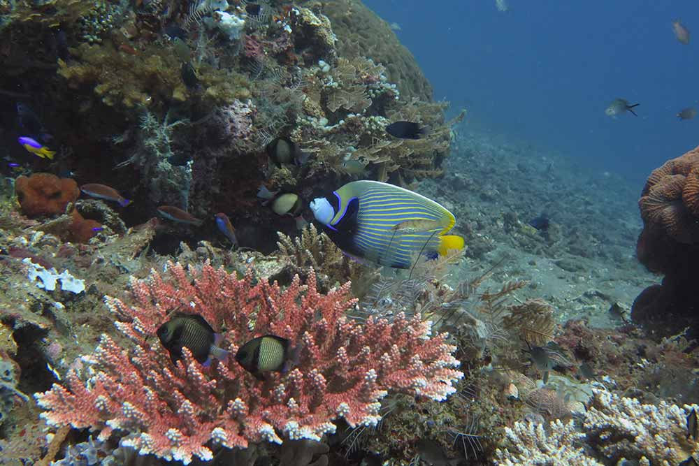 Lipah Bay dive site is like diving in a huge aquarium. So much fish!