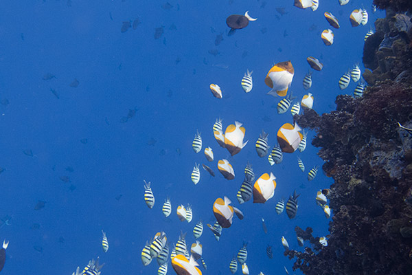 Big schools of little fish