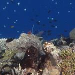 Diving on Bunaken