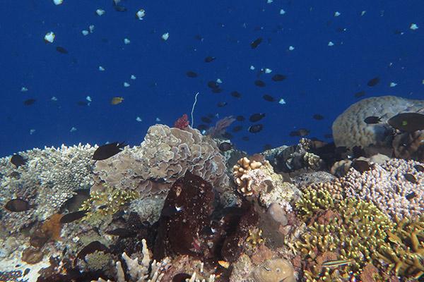 FlipFlopGlobetrotters.com - diving on Bunaken