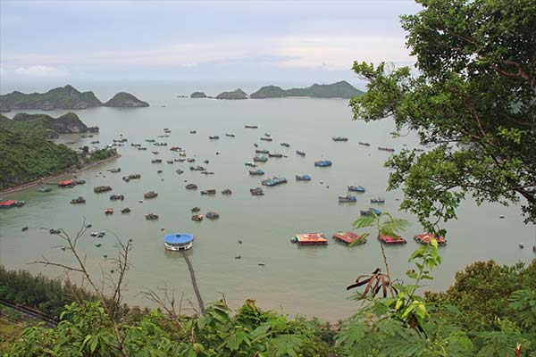 FlipFlopGlobetrotters.com - Cat Ba Island - Overview of the harbour at Cat Ba town seen from Cannon Fort. A great place to visit if only because of the view point