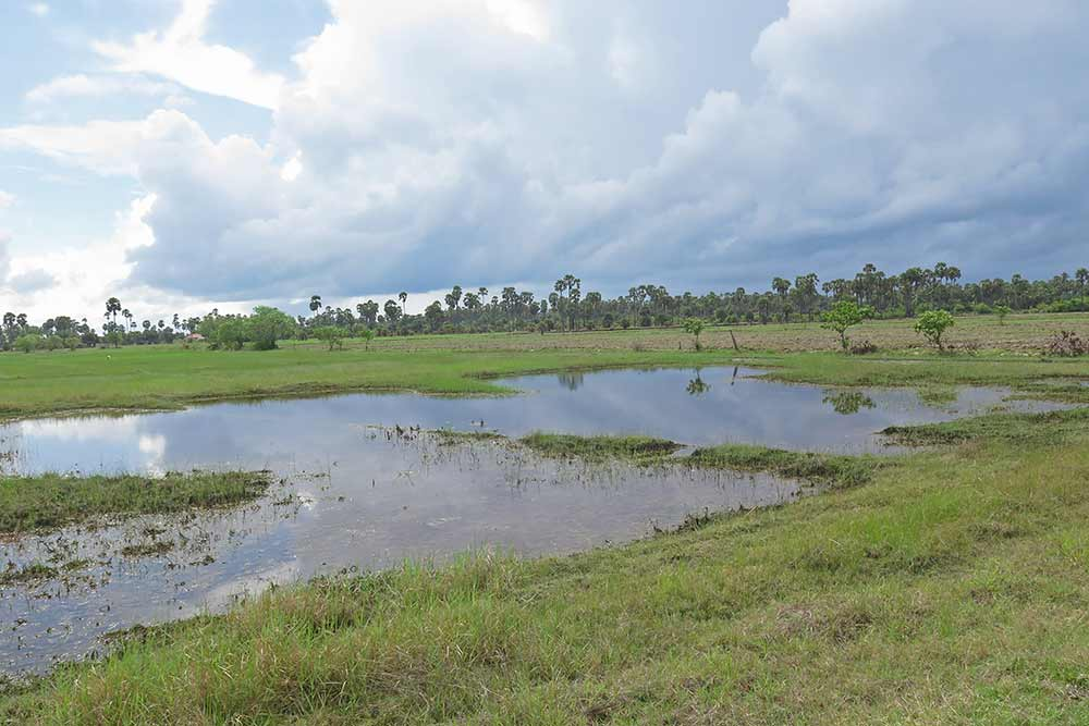 The area around Jaffna has a lot of lakes and wetlands where you can see a lot of different species of birds