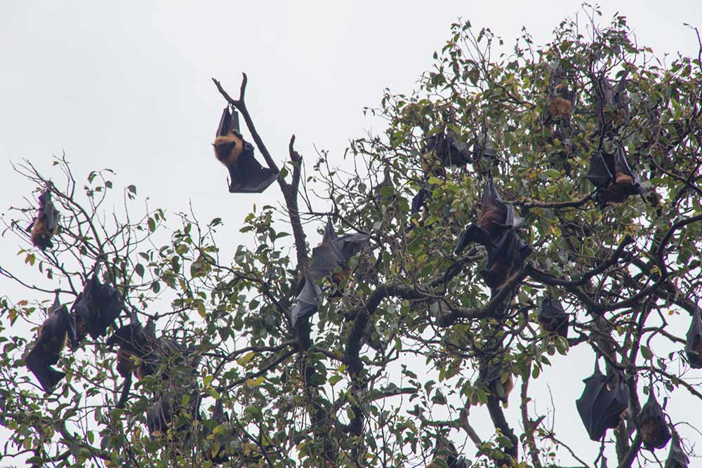 It was reaaaallly busy in the bat tree. We've never seen so many bats outside during the day like this.