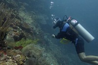 My first dives at Moalboal