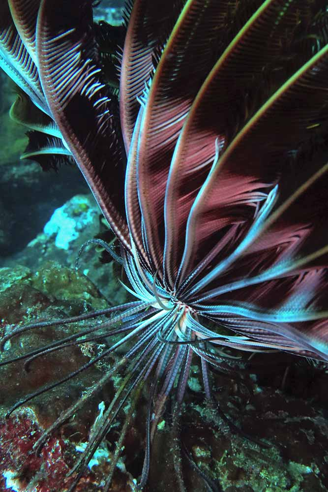 Close up of a feather star