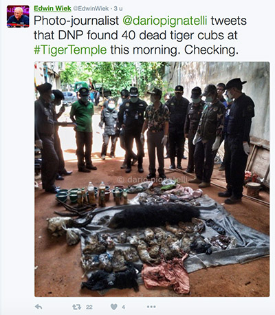 FlpFlopGlobetrotters - dead tiger cubs found at Thai Tiger Temple