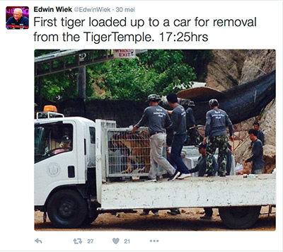 FlpFlopGlobetrotters - first tiger loaded on truck for removal from Thai Tiger Temple
