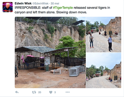 FlpFlopGlobetrotters - irresponsible Thai Tiger Temple staff slowing down move by releasing tigers