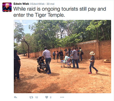 FlpFlopGlobetrotters - tourists still visiting tiger temple during tiger rescue operation