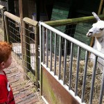 Fun things to do in and around Haarlem part 1: Animals