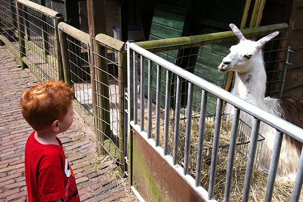 FlipFlopGlobetrotters.com - petting zoos in Haarlem: Animals
