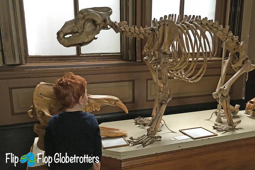 FlipFlopGlobetrotters.com - Blog: Teylers Museum Haarlem - face to face with a cave bear skeleton
