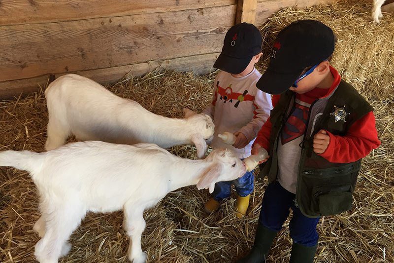 FlipFlopGlobetrotters.com - Things to do in Leiden with kids - kids feeding goats at Goat farm t Geertje Zoeterwoude