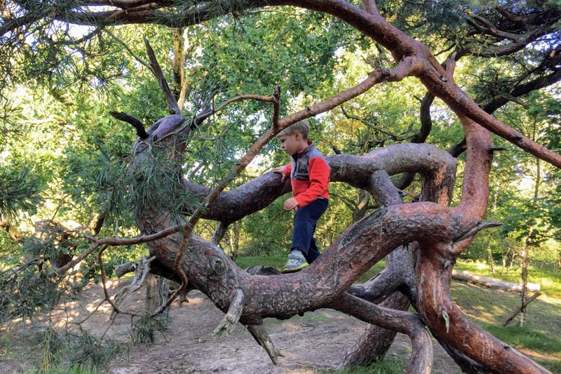 FlipFlopGlobetrotters.com - Things to do in Wassenaar with kids - Monkeybos boy climbing a tree