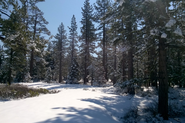 FlipFlopGlobetrotters.com - best places to visit in usa with kids - snow covered trees at Lake Tahoe