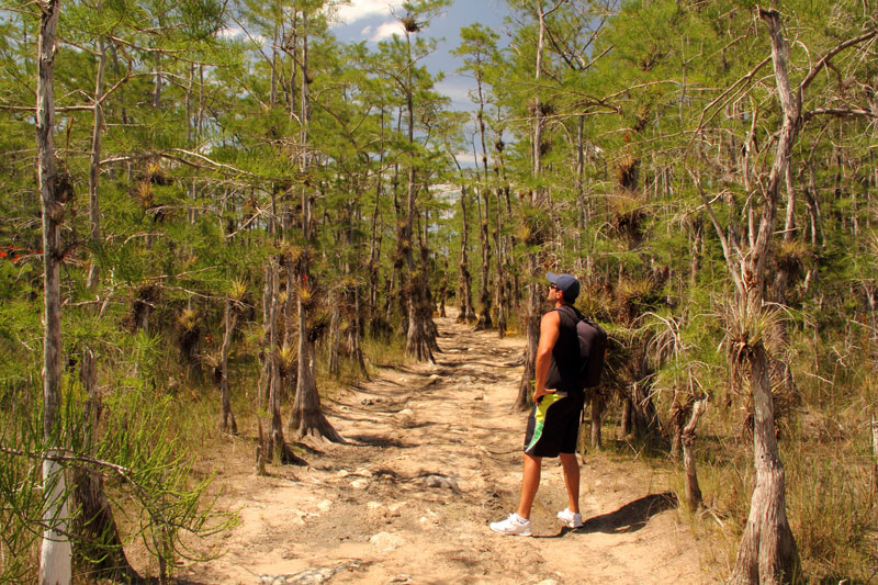 FlipFlopGlobetrotters - things to do in Miami with kids - Big Cypress National Preserve with kids