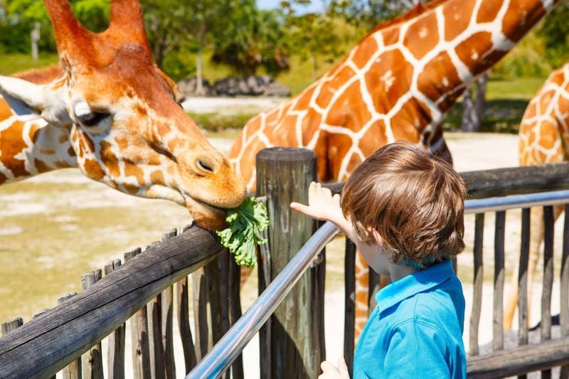 FlipFlopGlobetrotters - things to do in Miami with kids - Miami Zoo, Miami