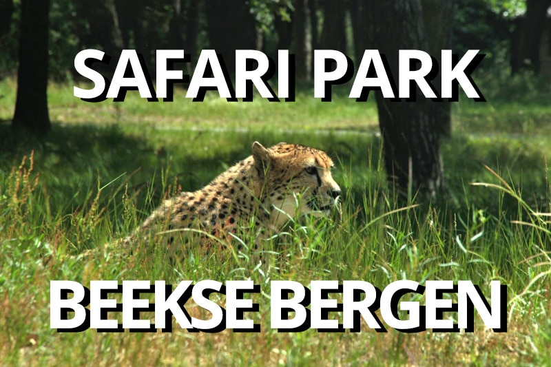 Beekse Bergen – on safari in The Netherlands
