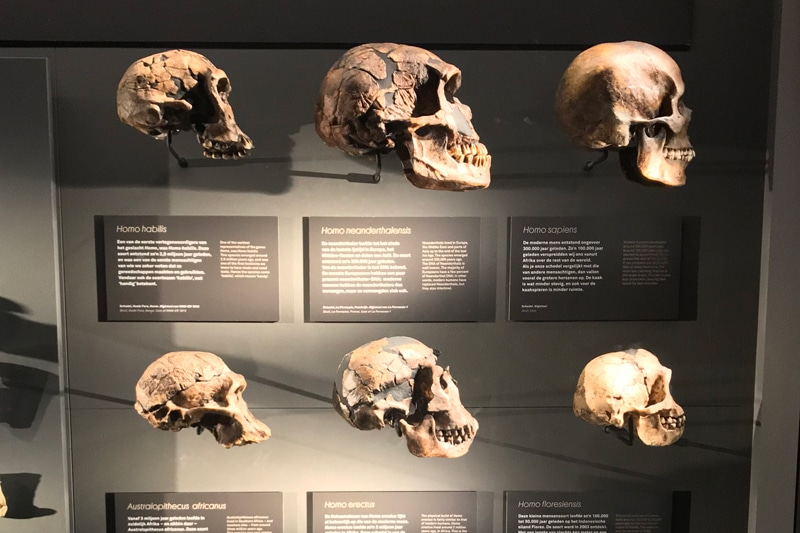 FlipFlopGlobetrotters - Skulls at the Early Humans Gallery
