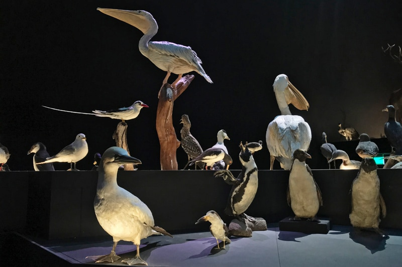 FlipFlopGlobetrotters - Life Gallery - Birds