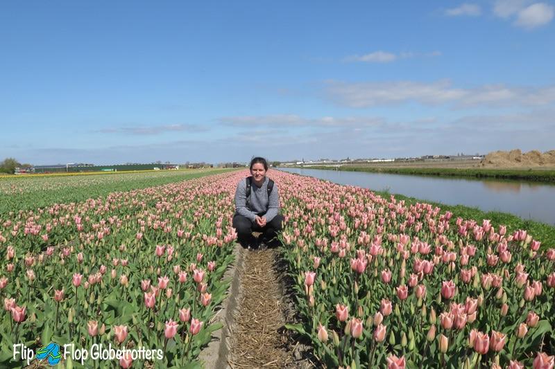 FlipFlopGlobetrotters - Netherlands - tulip fields Lisse